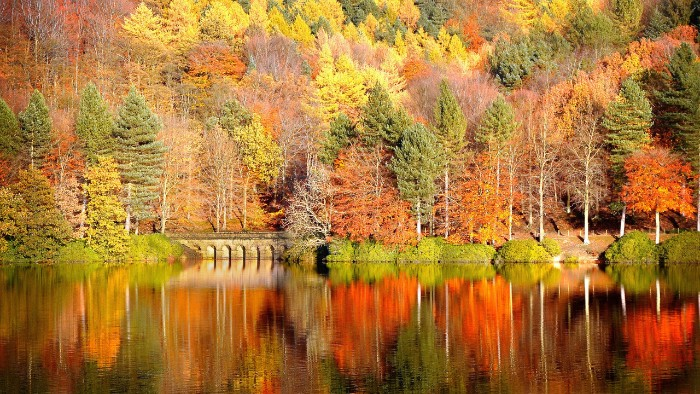 river or lake with a stone bridge, reflecting a forest, with trees covered in folliage in different colors, thanksgiving greeting message, colorful lakeside landscape