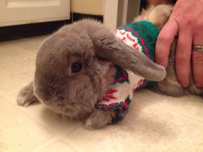 mink colored bunny, with fluffy fur, wearing a green and white knitted jumper, with red fair isle details, cute christmas sweaters, for rodents