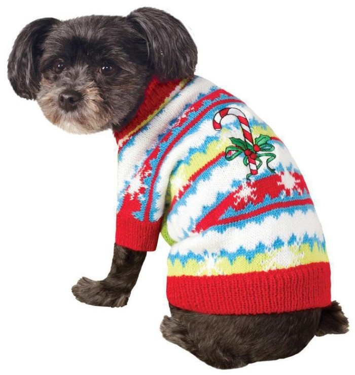 candy cane and a holly branch, embroidered on a multicolored jumper, worn by a brown dog, with a beige muzzle, cute christmas sweaters, on a white background