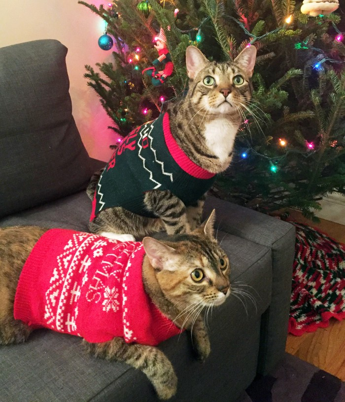 cats on a grey couch, wearing a red and a dark navy christmas jumpers, decorated with fair isle motifs, and festive messages, ugly sweater party for your pets