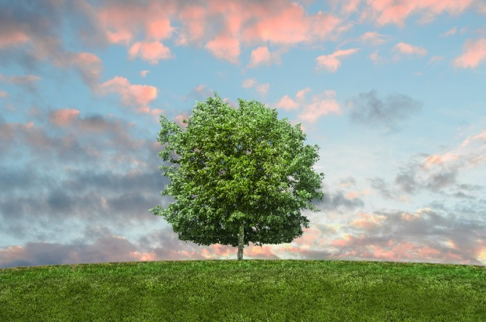 eco friendly, how to take care of nature, clouds up in the sky, green tree, living green