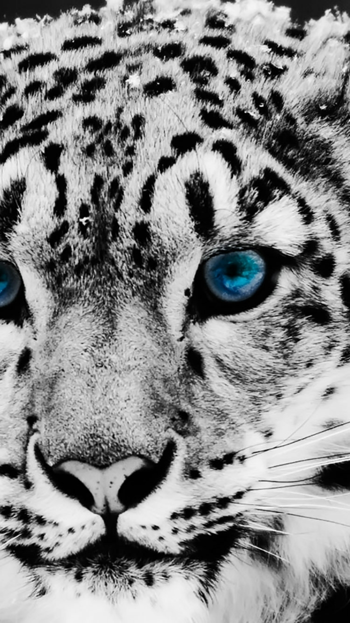 albino tiger, blue eyes, cool iphone wallpapers, black spots