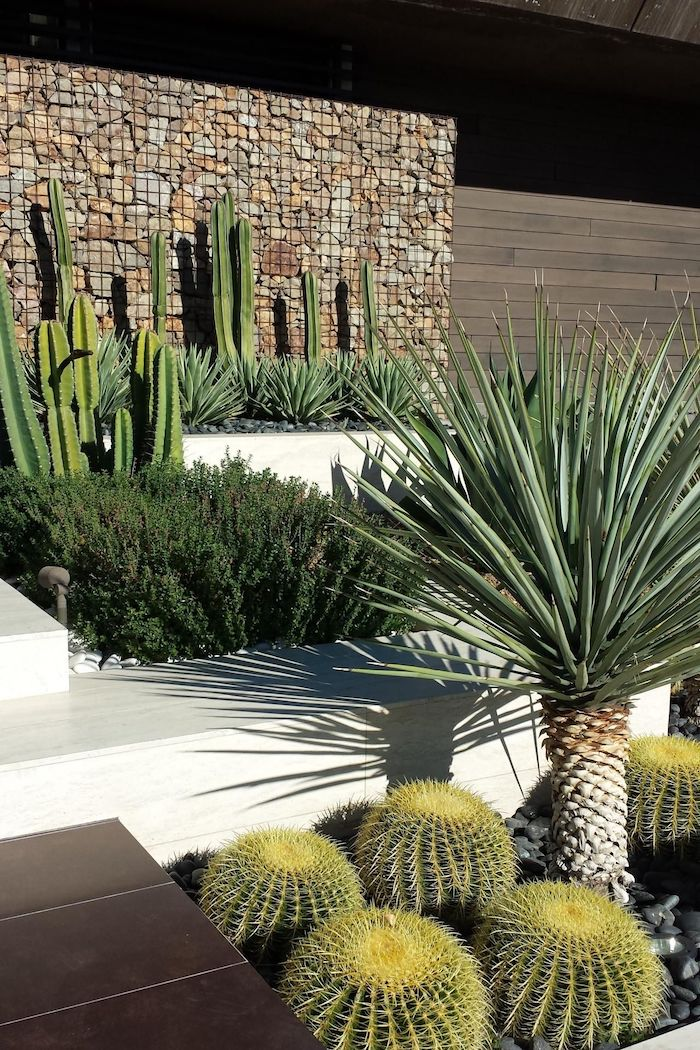 large rock wall, landscape edging ideas, patches with different types of cactuses, small palm tree