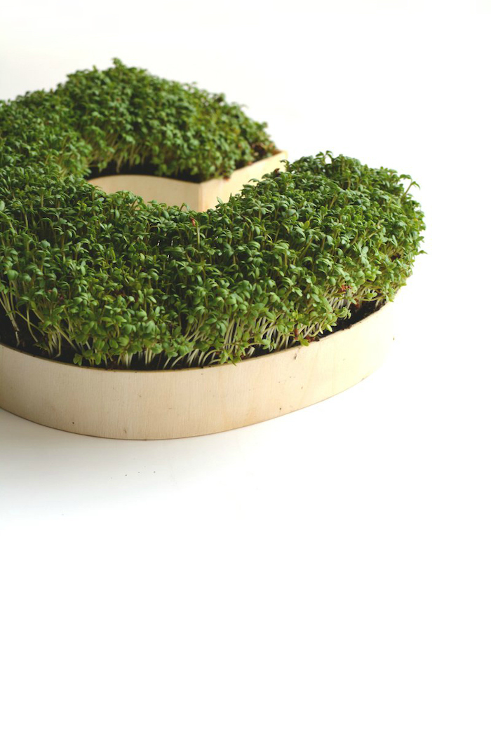grown cress, landscape border ideas, wooden c letter