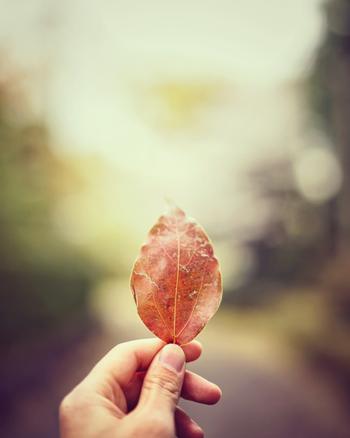 fallen leaf, hand holding a leaf, blurred background, summer iphone wallpaper