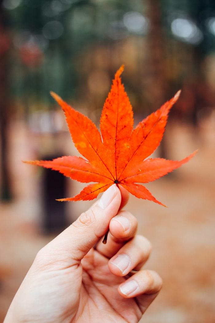fallen leaf, summer iphone wallpaper, hand holding a leaf, blurred background