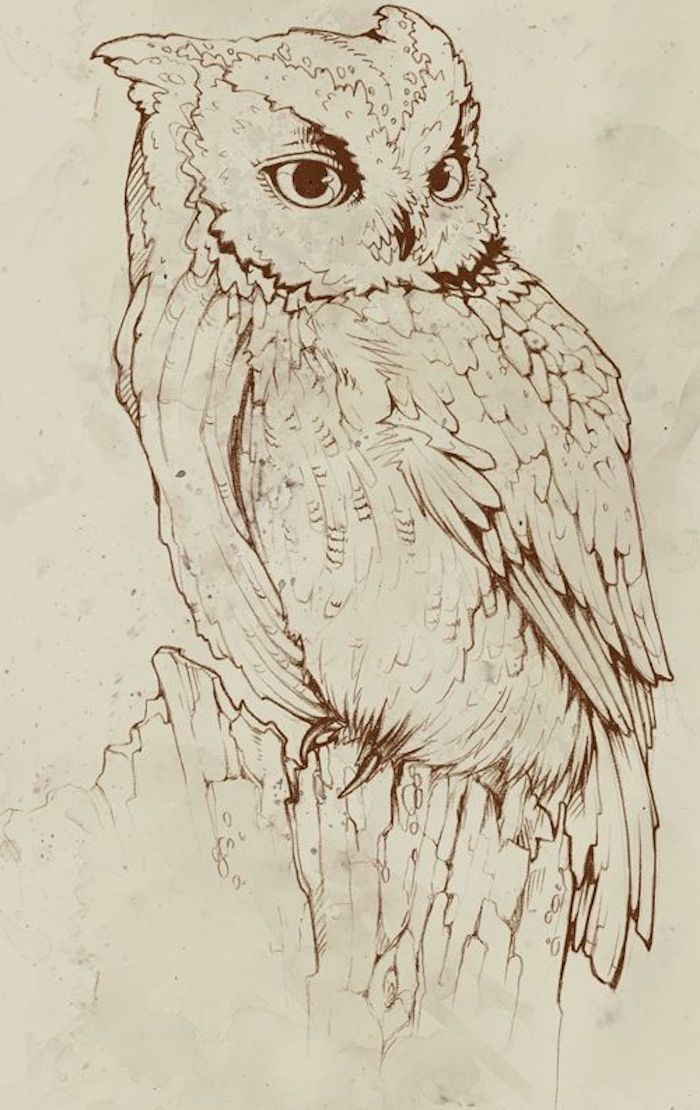 owl drawing, black and white sketch, tattoo ideas with meaning, white background
