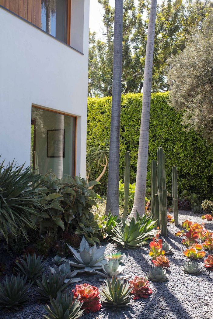 flower beds with cactuses succulents and bushes, tall hedges, tall palm trees, desert landscaping ideas