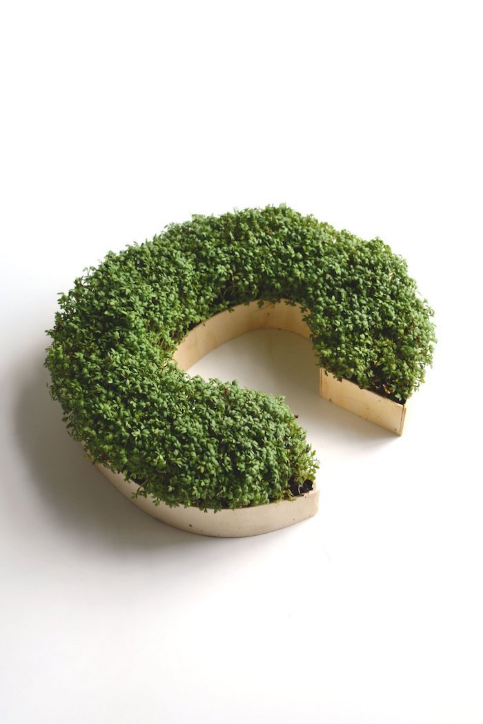 grown cress, wooden c letter, easy landscaping ideas
