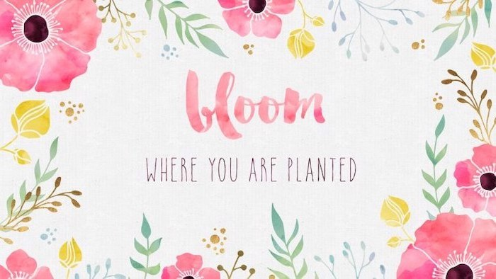bloom where you are planted quote, spring wallpaper for desktop, drawing of flowers, on a white background