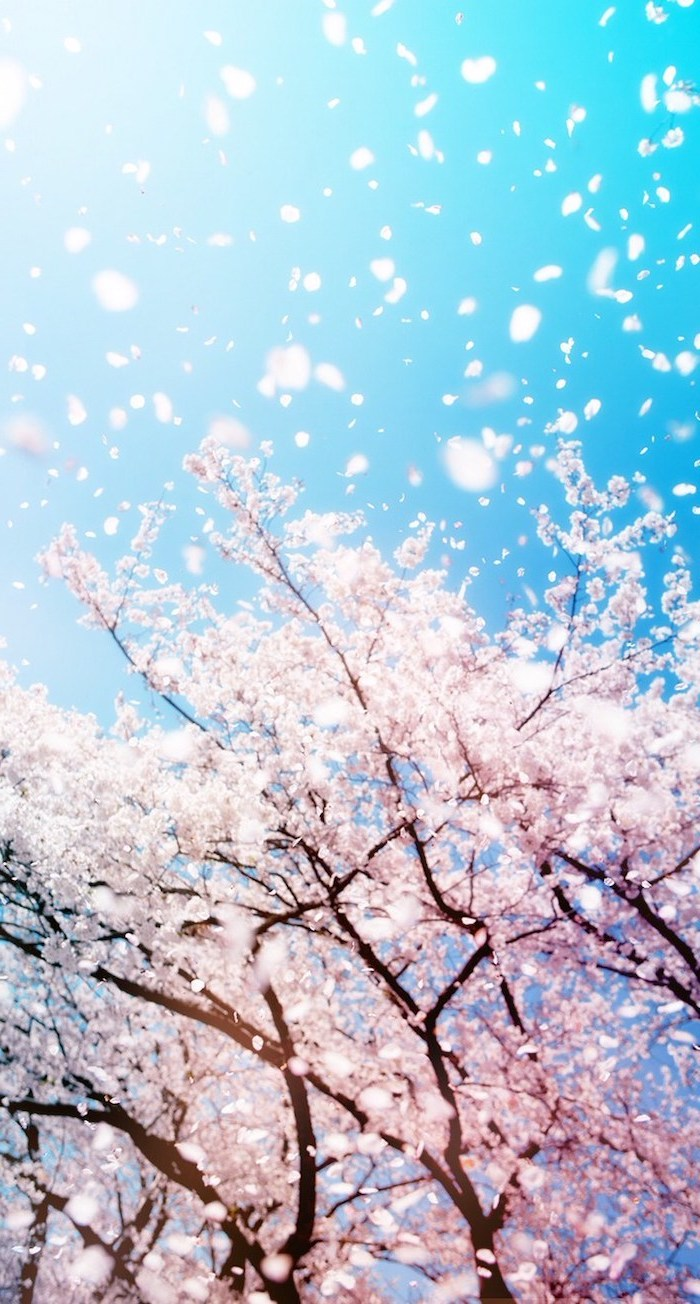spring background, blue skies, blooming tree, with blooms flying around, phone wallpaper
