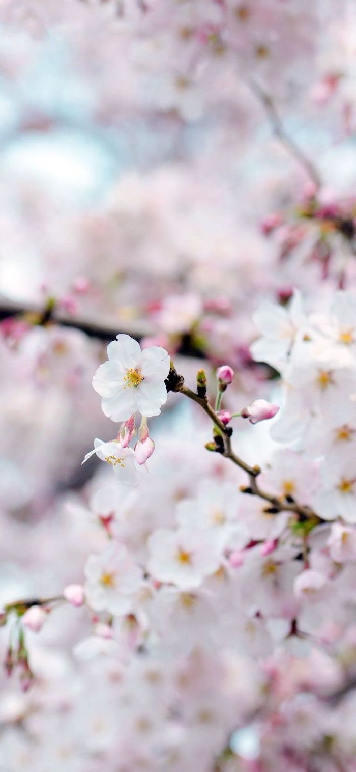 Spring Wallpaper A 100 Beautiful Images To Decorate Your Phone