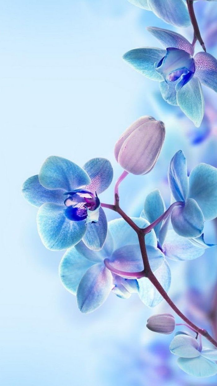 blue and purple flowers, blue background, floral phone wallpaper, spring background