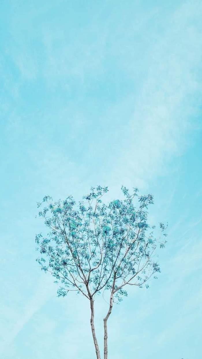 spring background, blue skies, blue blooming tree, phone wallpaper