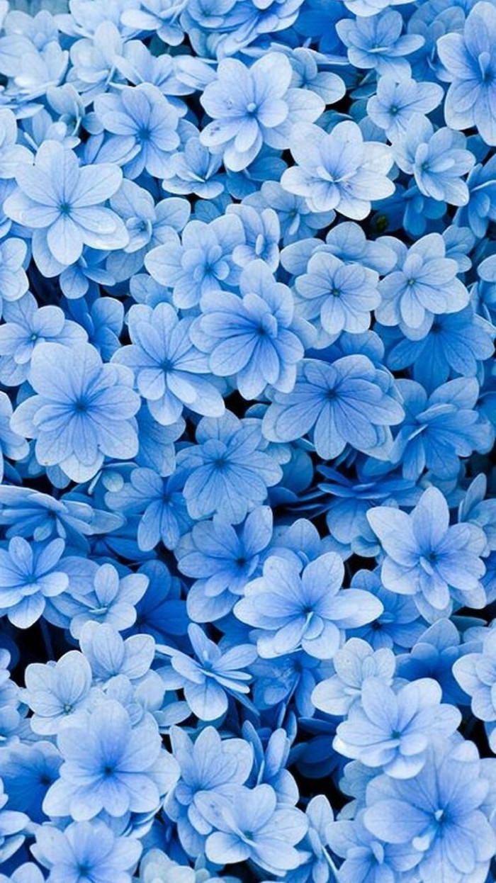 little blue flowers, floral phone wallpaper, phone background, spring images