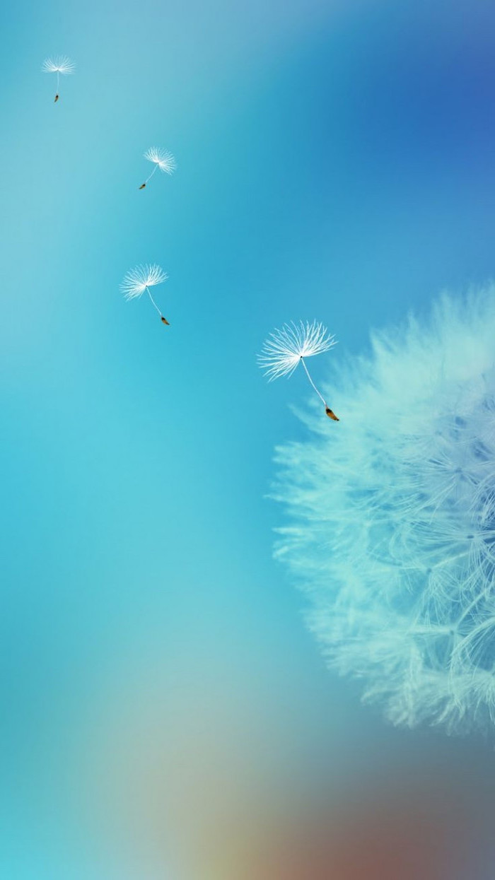 phone background, spring photos, dandelion flower, with dandelion seeds flying away, blue skies in the background