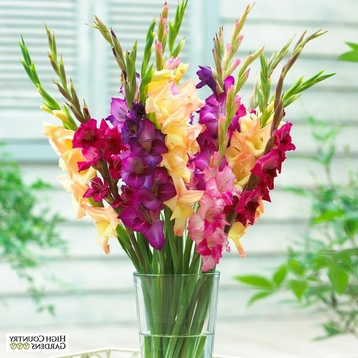 pink purple and yellow gladiolus, in a glass round vase, silk floral arrangements, blurred background