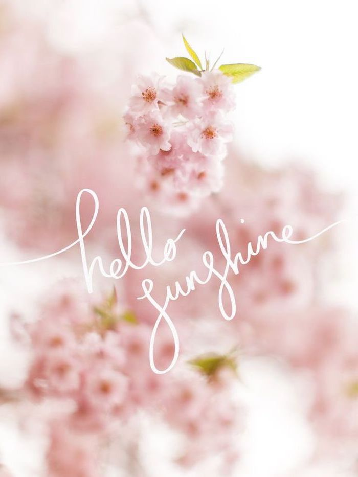 hello sunshine quote, blooming flowers in the background, phone wallpaper, images of spring
