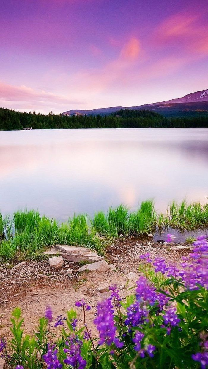 mountain landscape, images of spring, large lake, with flowers and trees around it, phone background