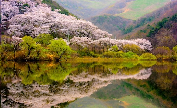 pink blooming flowers, surrounding a large lake, mountain landscape, spring flowers background