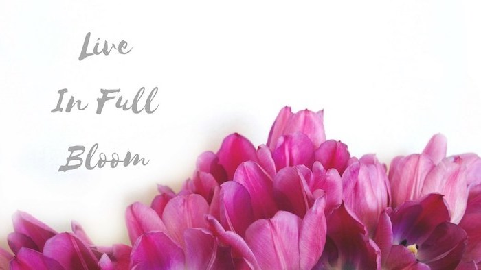 live in full bloom quote, on a white background, spring flowers background, pink tulips