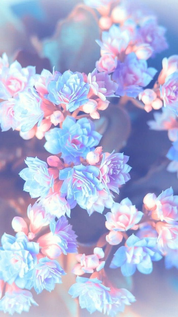 purple pink and blue flowers, blurred background, floral phone wallpaper, happy spring images