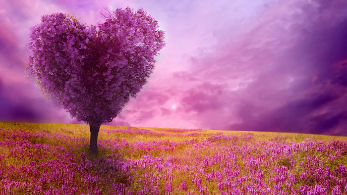 purple heart shaped tree, spring desktop backgrounds, purple skies, pink flowers field