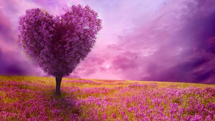 purple heart shaped tree, spring desktop backgrounds, purple skies, pink flowers field