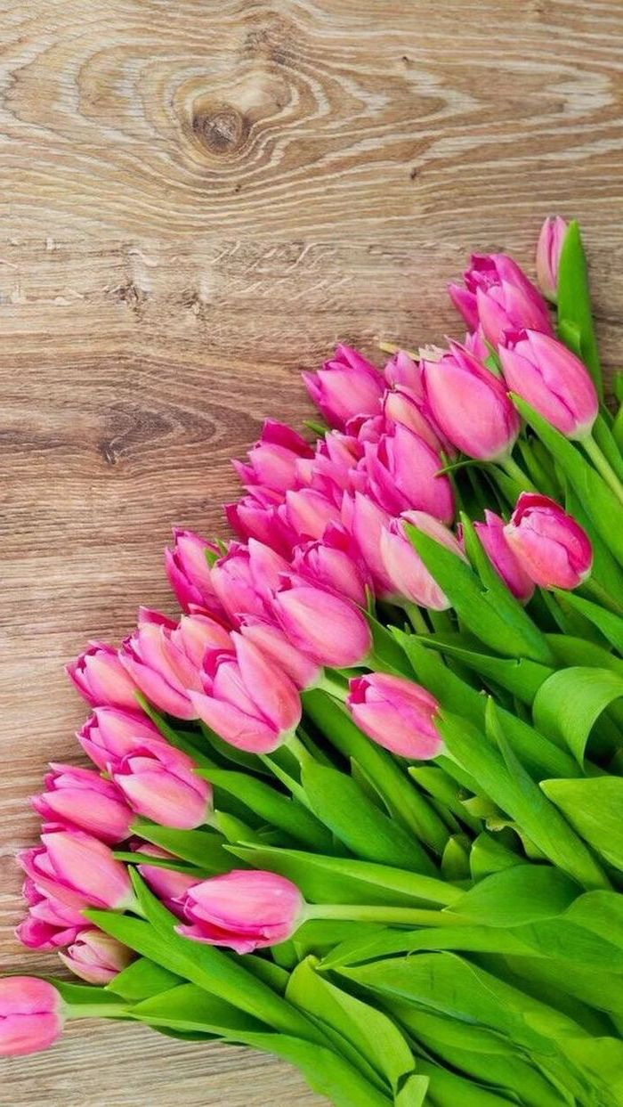 pink tulips, on a wooden table, spring wallpaper hd, floral phone wallpaper