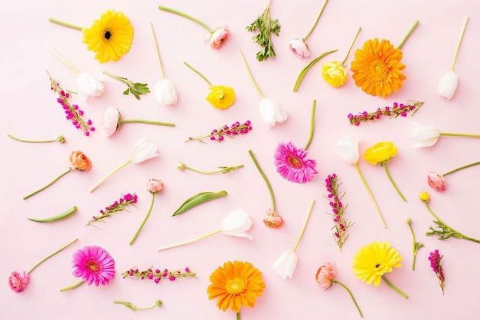 free spring wallpaper, lots of different flowers, arranged on a pink background, desktop wallpaper