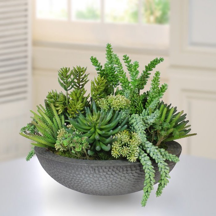 potted succulents, on a white countertop, floral arrangements, venetian blinds in the background