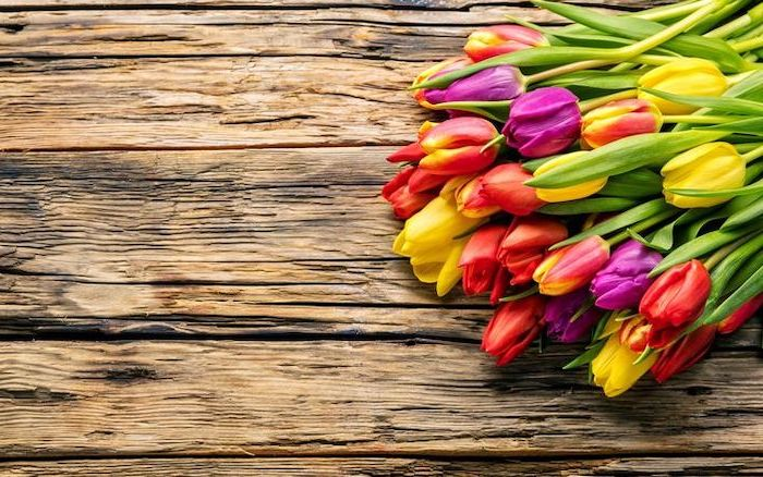 purple yellow and red tulips, on a wooden table, free spring wallpaper, desktop wallpaper