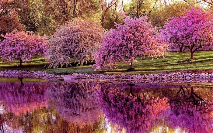 blooming trees, along a river, spring pictures for desktop, green field, with lots of trees