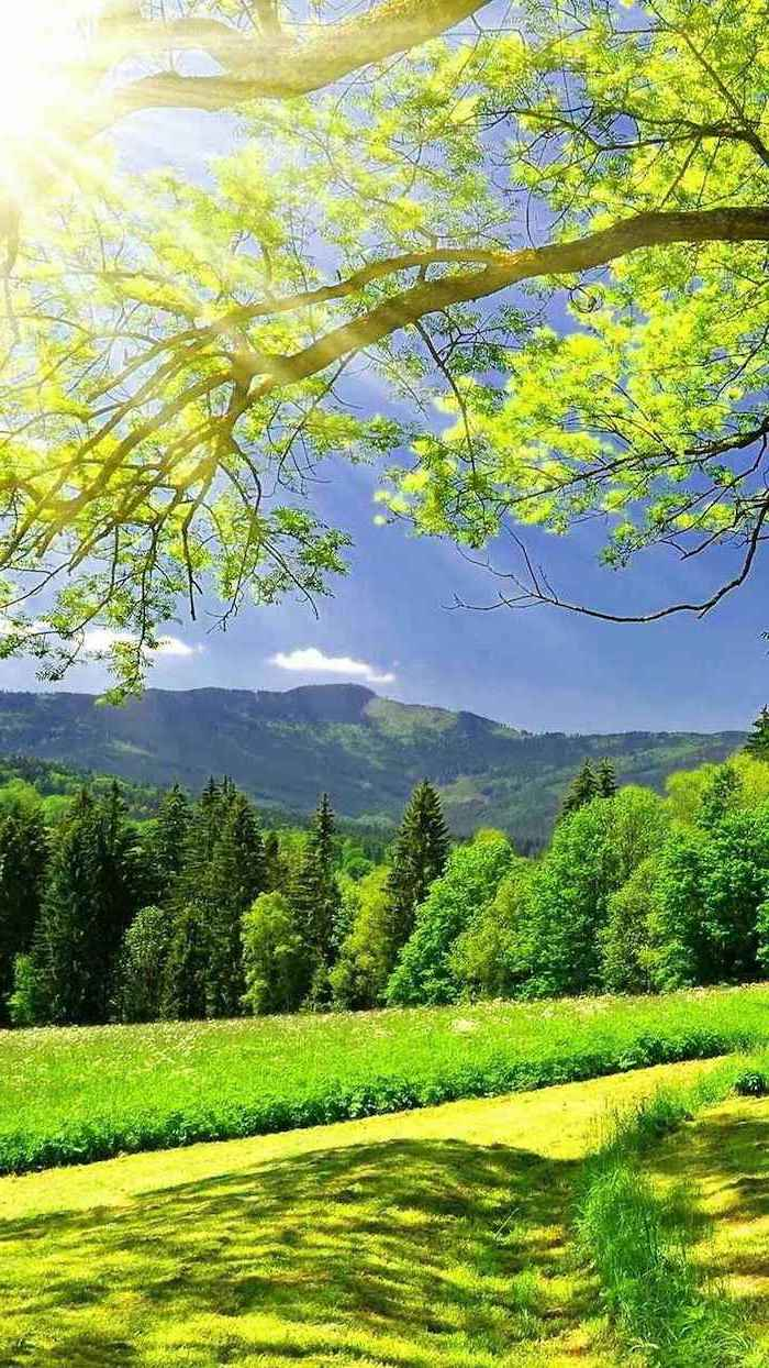 pictures of spring, mountain landscape, phone background, trees and greenery around, green grass field