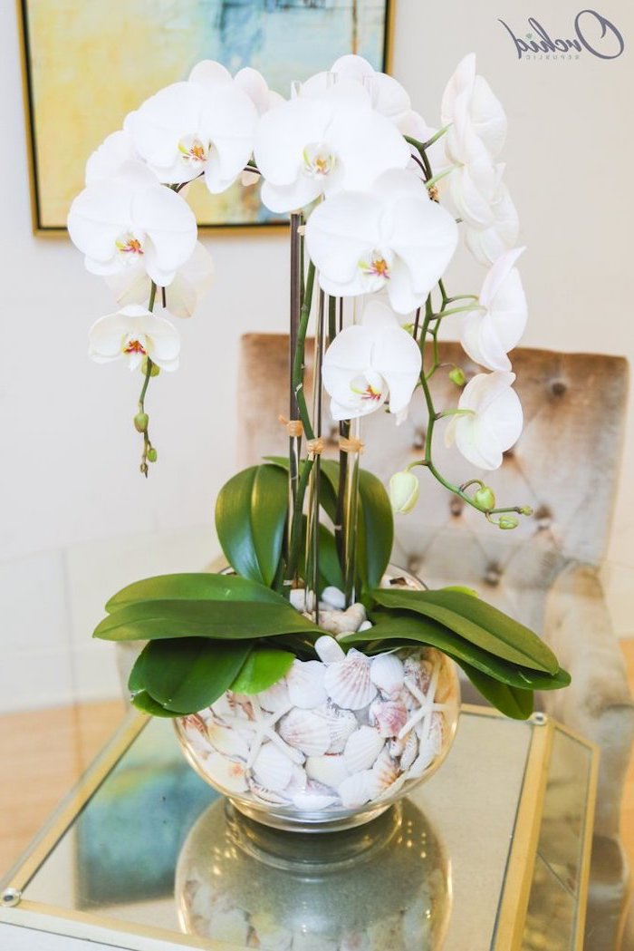 mason jar flower arrangements, white orchids, in a glass round vase, filled with seashells