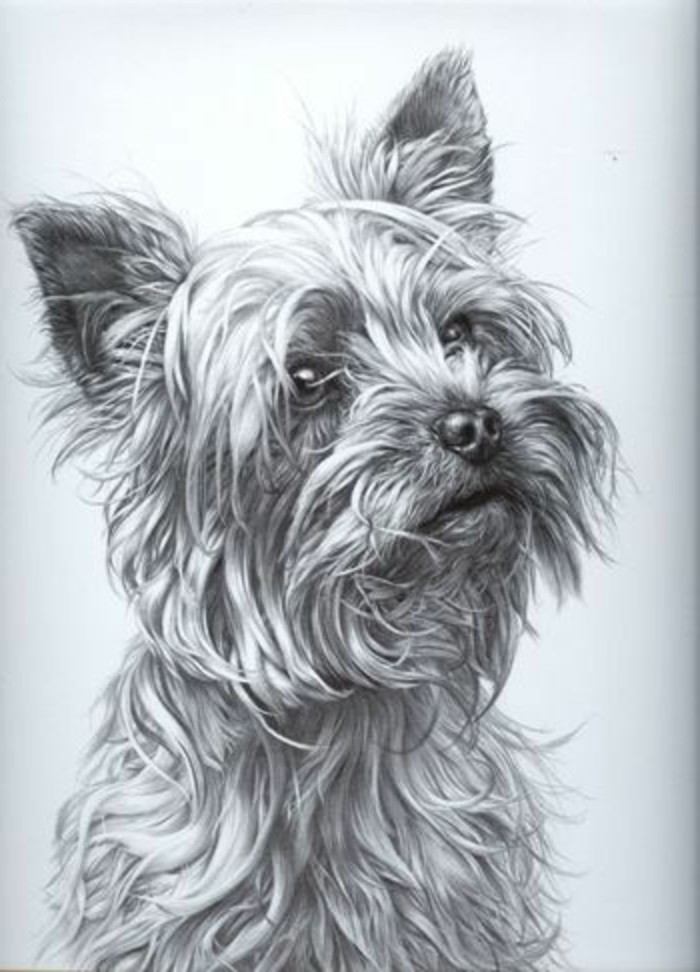 dog portrait, easy things to draw, black and white, pencil sketch