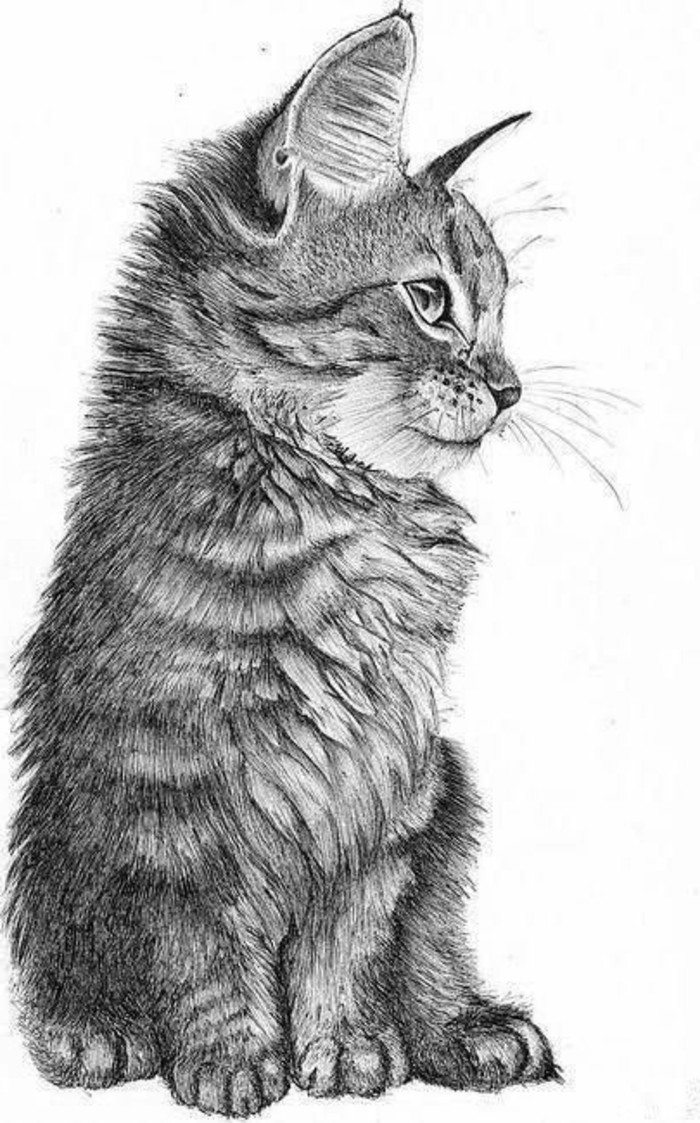 little cat, black and white, pencil sketch, white background, learn to draw with a pencil
