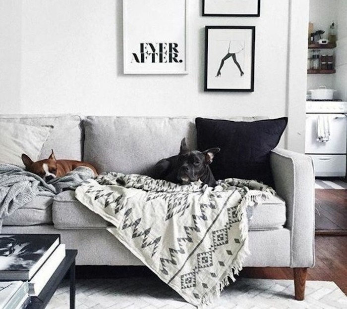 framed hanging art, light gray walls, two dogs, sitting on a grey sofa, white carpet, wooden floor