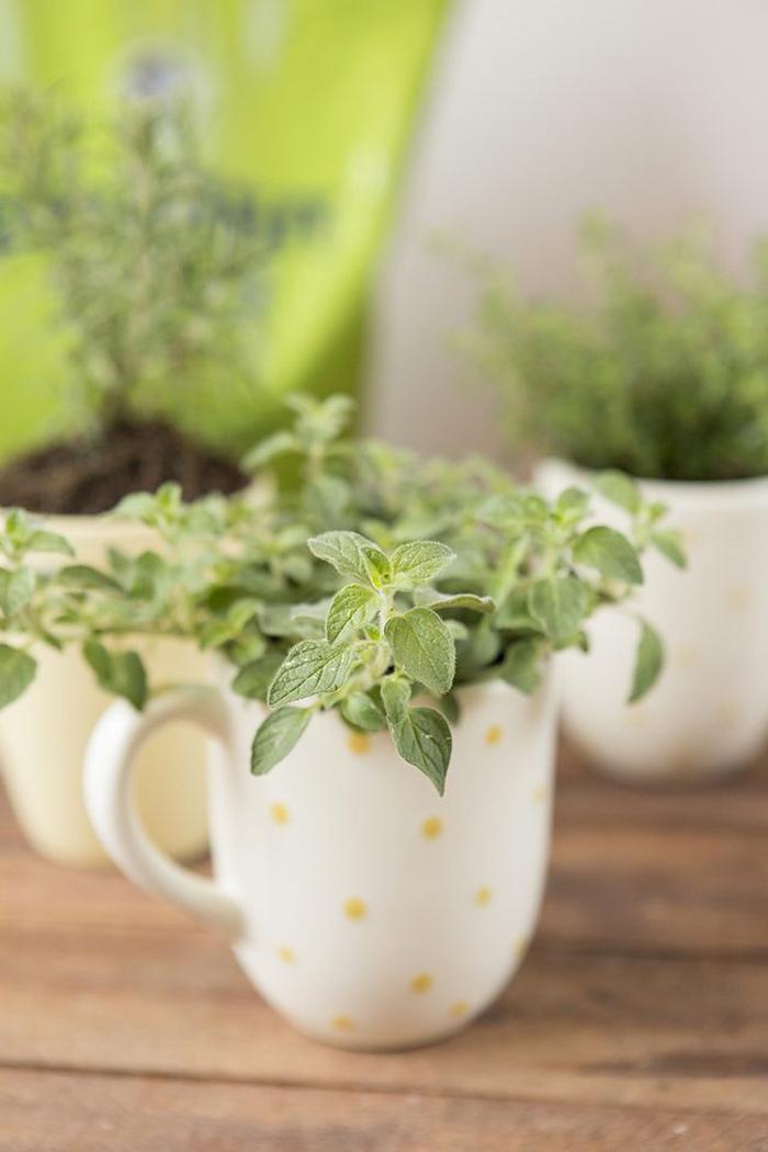 wooden table, housewarming gift ideas, herb garden, step by step, diy tutorial, coffee mugs