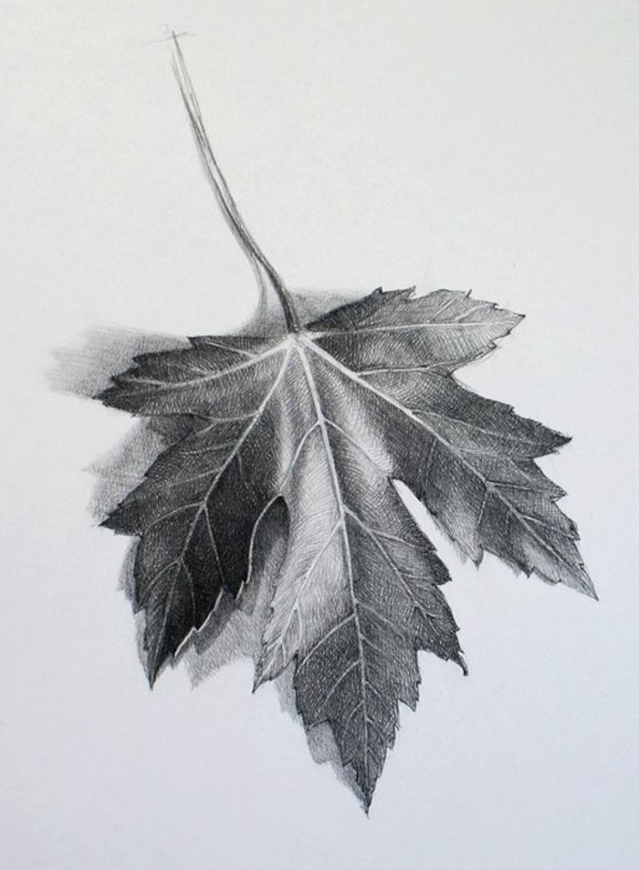 how to draw lips, grape leaf, black and white, pencil sketch