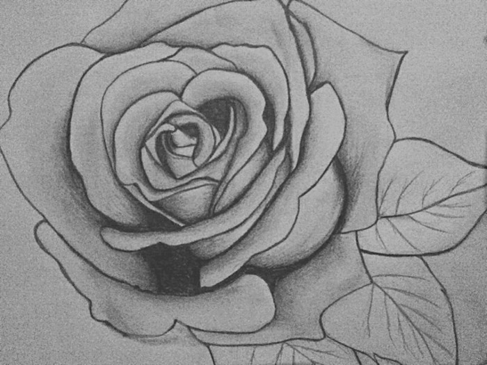 black and white, pencil sketch of a rose, how to draw hair