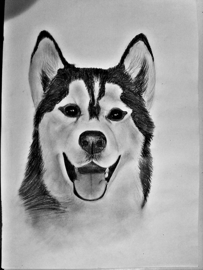 husky dog, how to draw cool things, black and white, pencil sketch, white background, cool pictures to draw for beginners