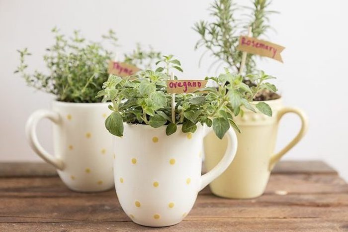 coffee mugs, herb garden, diy tutorial, step by step, housewarming gift ideas
