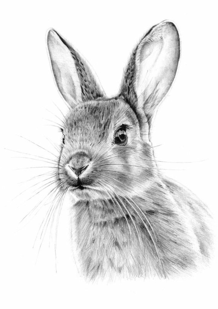 rabbit drawing, what should i draw, black and white, pencil sketch, white background