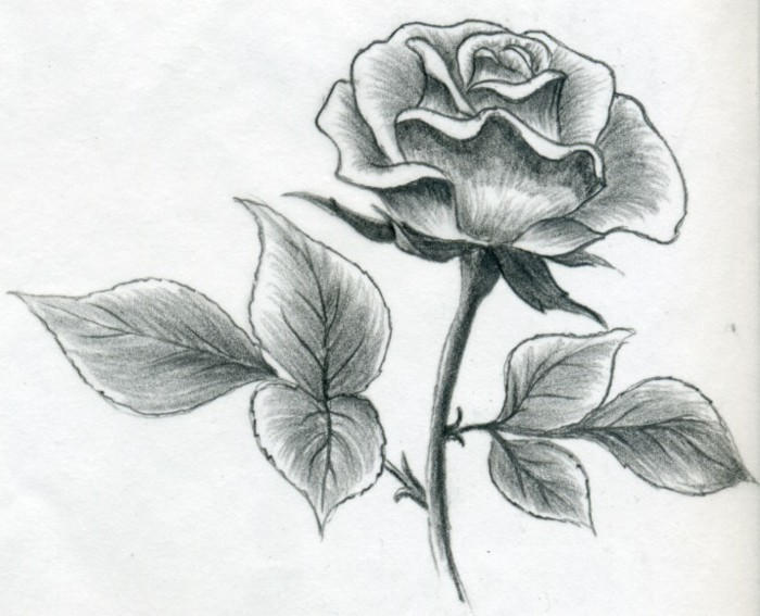 rose drawing, in black and white, what should i draw, pencil sketch