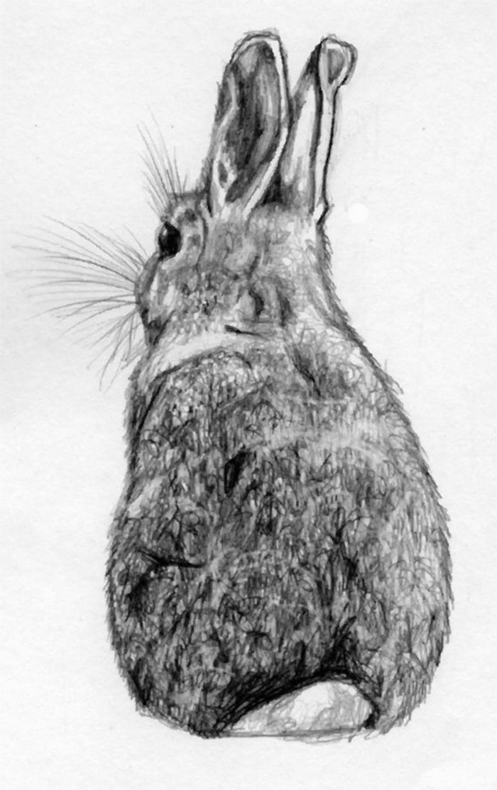 rabbit drawing, white background, how to draw a face, pencil sketch, in black and white