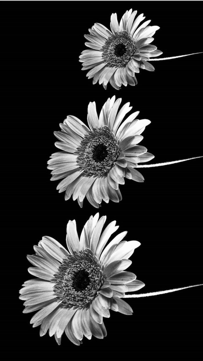 black and white photo, three sunflowers, love quotes tumblr, black background