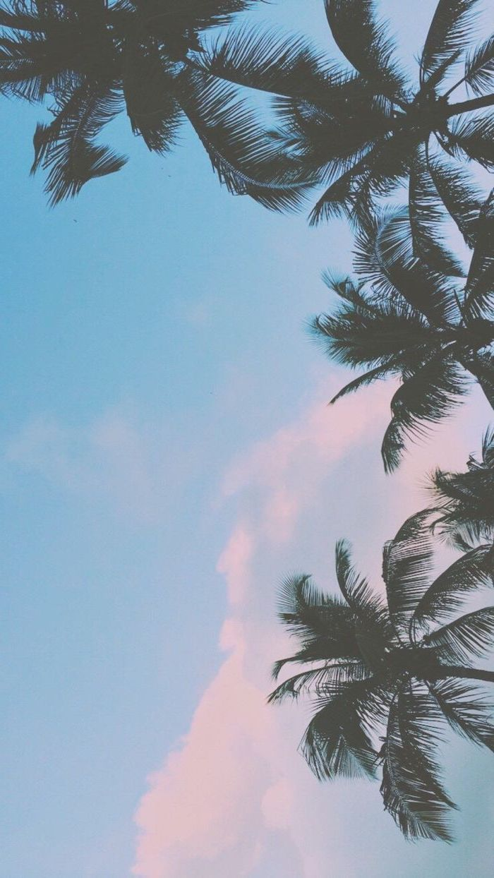 cute iphone wallpapers, blue sky, tall palm trees