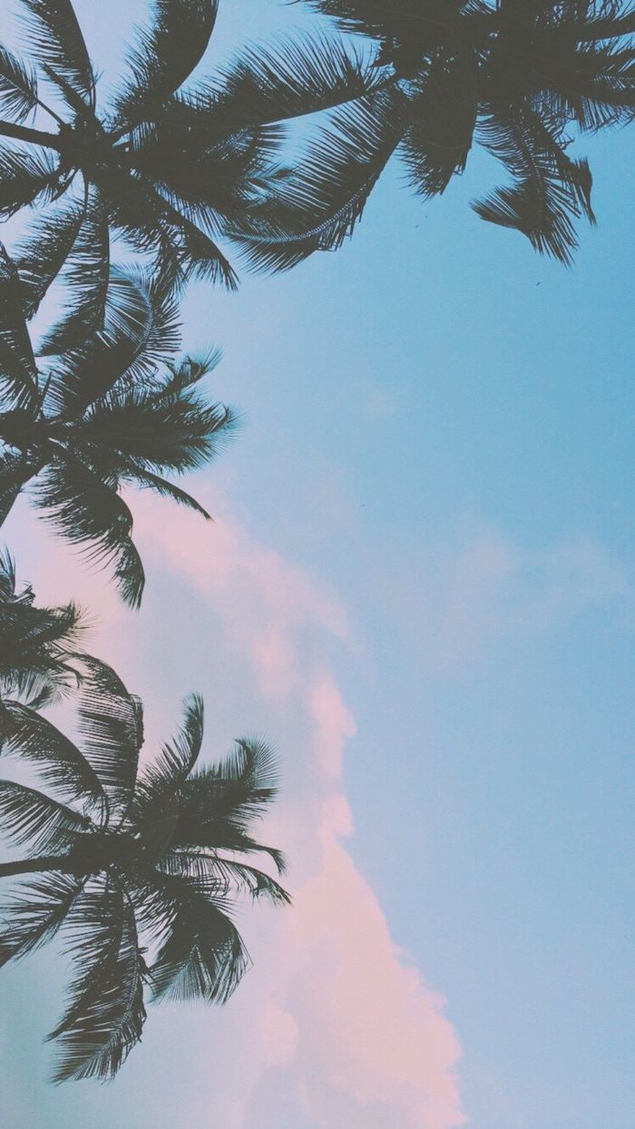 cool backgrounds tumblr, tall palm trees, blue sky