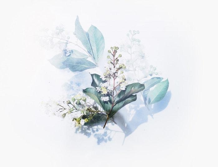 white background, pink background tumblr, white flowers